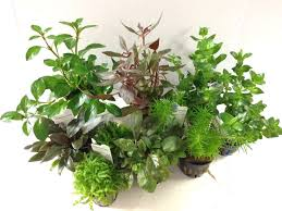 Aquascaping Plants Dutch Aquascaping Plant Collection For Tanks Up To 30