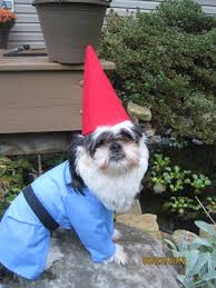small dog witch costume custom made order for traveling gnome dog halloween costume