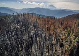Washington Forest images In a changing climate will fire make a bigger run in western jpg