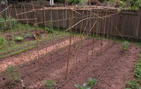 installing drip irrigation squash practice