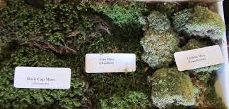 terrarium mosses