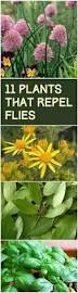 Backyard Fly Repellent Best 25 Repel Flies Ideas On Pinterest Flies Repellent Outdoor