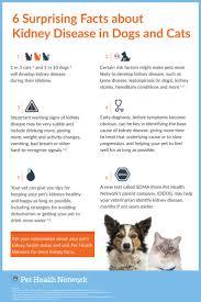 460 best animal wellness images on pinterest pet health dog