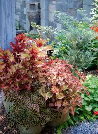 ten container gardening tips for beginners