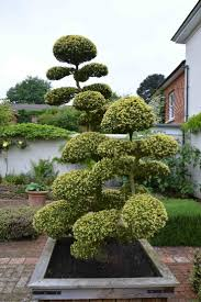 Topiary Cloud Trees - 144 best niwaki images on pinterest bonsai trees japanese