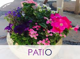 Potted Plants For Patio Potted Plants And Indoor Plants For Office Or Home Pleasanton