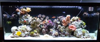 Aquascape Reef 75 Gallon Tank Aquascape Ideas Please Reef Central Online Community