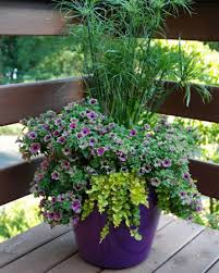 experts tips for a lush patio garden container gardening