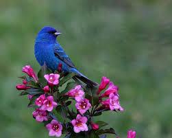 Flower And Bird - wallpaper birds and flowers wallpapersafari