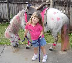 10 unusual ponies horse nation