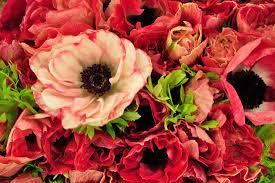 flowers in november november s flower market report new covent garden market