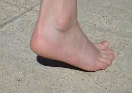 Skeletal Picture Of Foot Heel Wikipedia
