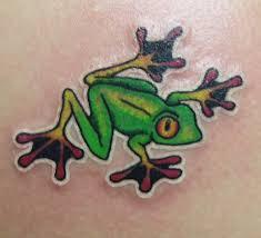 eyed tree frog