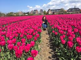 can you still see the tulips of the netherlands in may