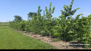 high quality trees shrubs great plains nursery