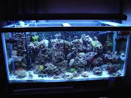 dealing with nasty marine algae break outs reef aquarium