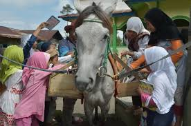 horseback library serves indonesia s remote readers daily mail