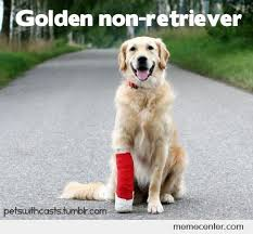 Golden Retriever Meme - golden non retriever by ben meme center