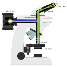 compound light microscope function what is the function of the mirror on a microscope