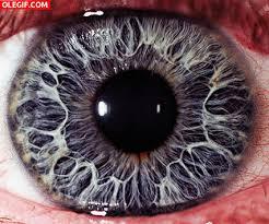 imagenes gif imagenes con movimiento ojos movimiento gif find download on gifer