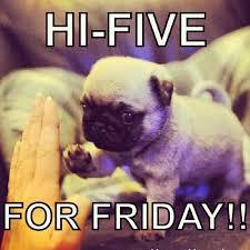 Cute Puppy Meme - cute puppies memes google search puppy memes pinterest memes