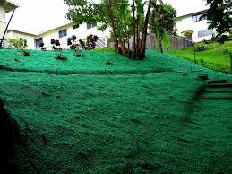 native hawaiian plants how hydro seeding services prevent erosion hui kū maoli ola