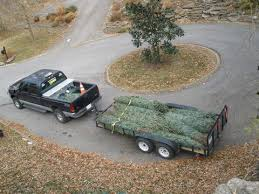 products clements lawn service tree delivery