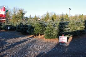 santa fir christmas tree farm guildford surrey sussex london