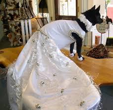 dog wedding dress salem design wedding salem dog wedding cricket black magic
