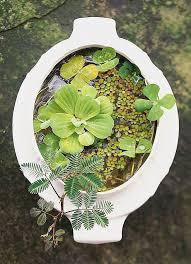18 best mn pond images on pinterest garden ideas gardening and