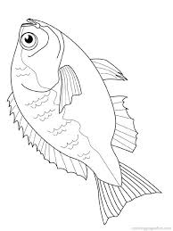 311 fishes images fish art coloring