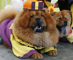 Halloween Costumes Dogs Cutest Puppy Costumes 2011 130 Funny Dog Pictures Images Funny Dogs