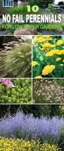Summer Flower Garden Ideas - best 25 perennial gardens ideas on pinterest perennials summer
