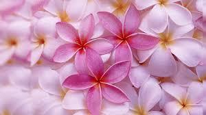 Flower Wallpaper Flower Desktop Wallpaper 32 Best Hd Backgrounds Of Flower Hd