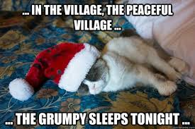 Grumpy Cat Sleep Meme - super cute a grumpy cat christmas humor pinterest grumpy cat