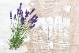 lavender flowers on rustic wooden background fresh blossoms