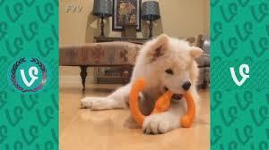 boxer dog vine funny dog archives just cat videos