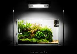 Small Tank Aquascaping Escarpment U0027 Nature Aquarium By James Findley The Green Machine