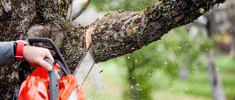 expert fencing and treework ark fencing and treework dorset