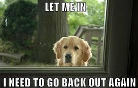 Meme Dogs - 25 dog memes that will always make us laugh