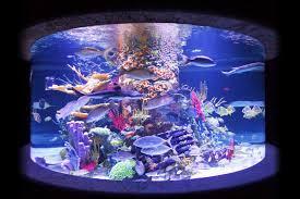 artificial coral reef aquarium decoration inserts aquarium