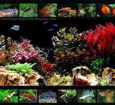 Aquascape Freshwater Aquarium Freshwater Aquarium Fish Chart Aquarium Images Tropical Freshwater