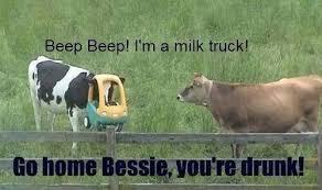 Moo Meme - drunk cow milk truck http melanysguydlines com milk drunk