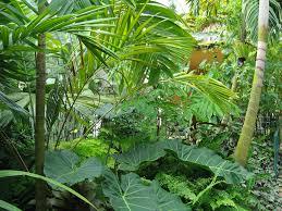 Tropical Plants Pictures - tropical plants