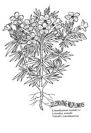 coloring book pages wildflower coloring pages beautiful