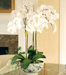 buy an orchid luxury artificial luxury orchid pot plant amaranthine blooms