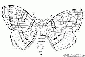 coloring page butterfly in the fall