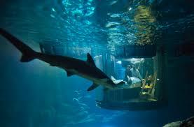 paris aquarium u0027s underwater bedroom