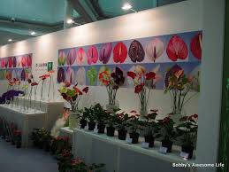 floral art exhibition wallpapers international horticulture festival 고양국제꽃박람회 bobby u0027s