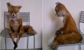 Meme Fox - meet stoned fox the badly stuffed creature reborn as a russian